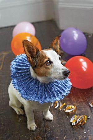 Crocheted dog collar in powder blue yarn