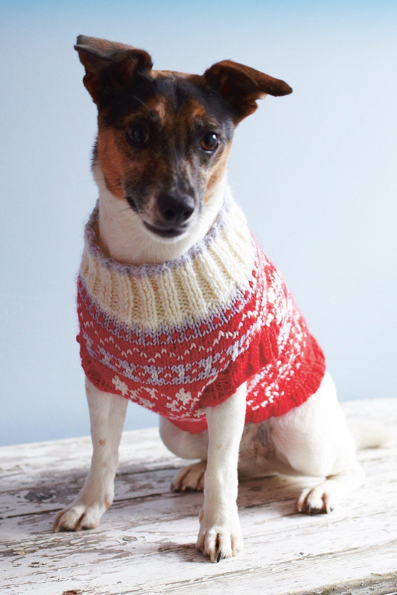 Dog Coat Knitting Pattern | The Knitting Network
