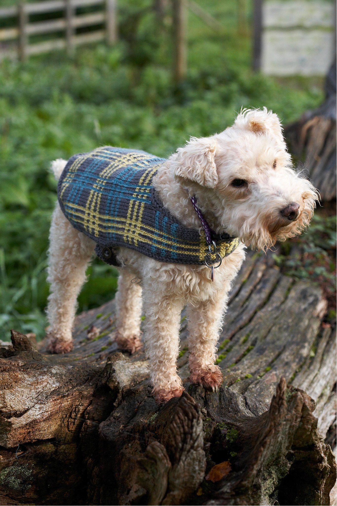 Vintage Dog Coat With Plaid Design Knitting Pattern | The ...