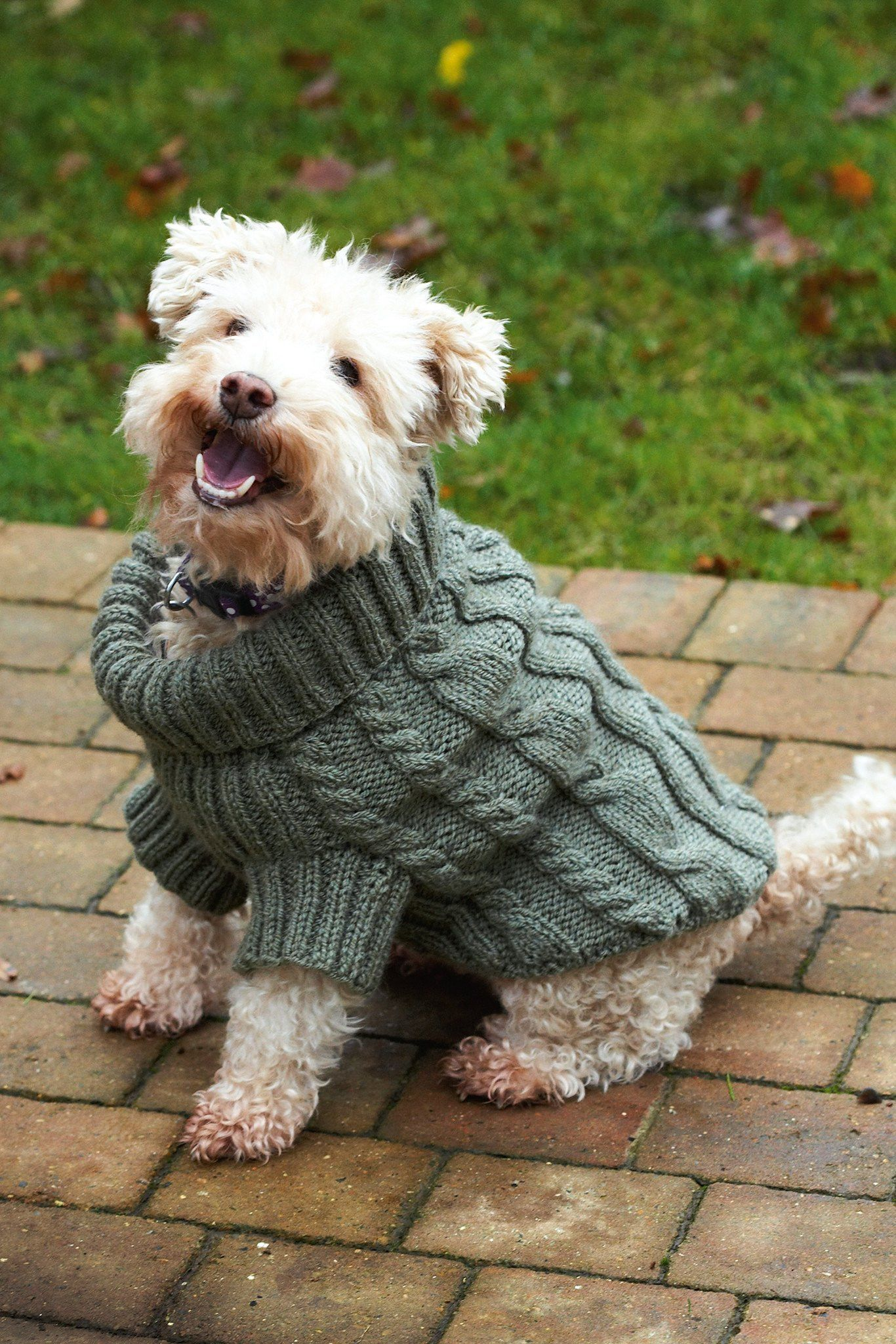 Dog Jumper With Cables Knitting Pattern | The Knitting Network