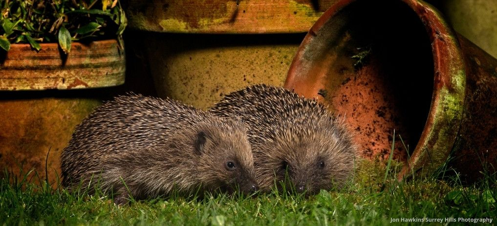 Charity of the Month - The Wildlife Trusts