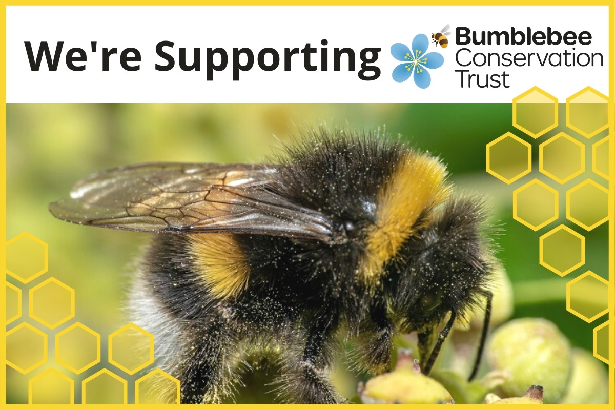 Charity of the Month - Bumblebee Conservation Trust