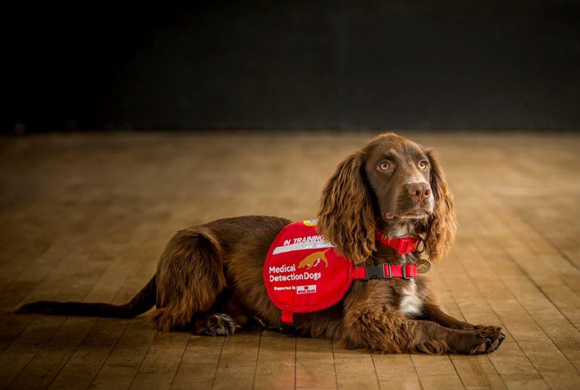 Charity of the Month - Medical Detection Dogs
