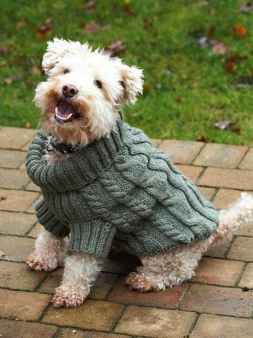 Knitted dog jumper with cables